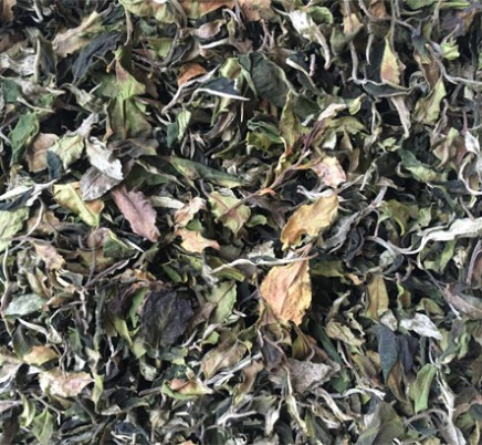 Old Tree White Tea-Gu Shu Bai Lu
