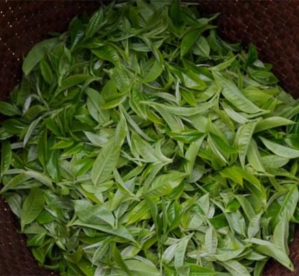 Old Tree Yunnan Black Tea