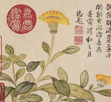 Blooming Tea Jin Zhan Yin Tan