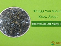 Things You Should Know About Phoenix Mi Lan Xiang Tea