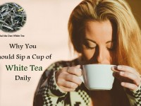 Why You Should Sip a Cup of White Tea Daily