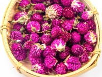 Amaranth Flower Qian Ri Hong