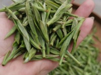 The fresh leaf material to process top grade Bai Mu Dan