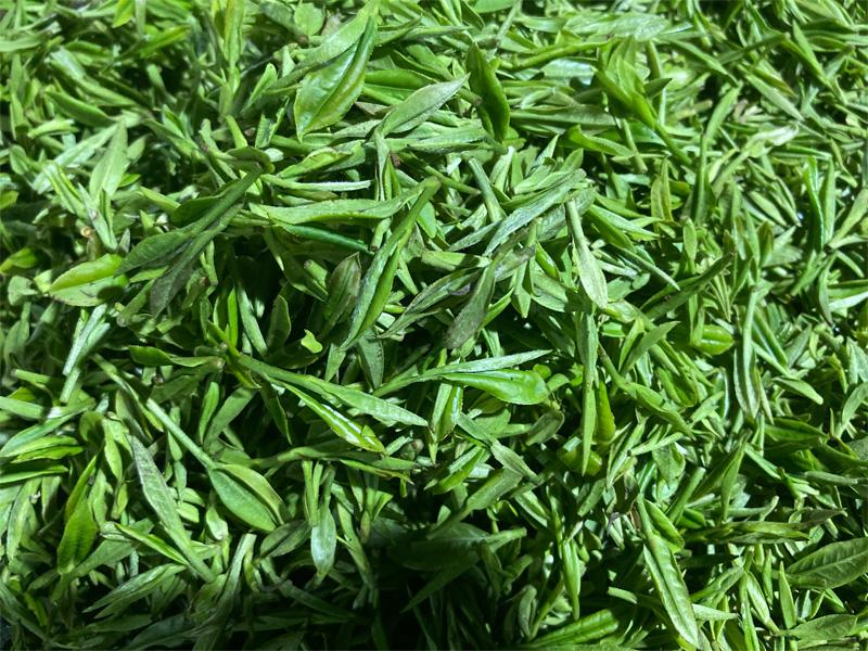 Organic Long Jing 16