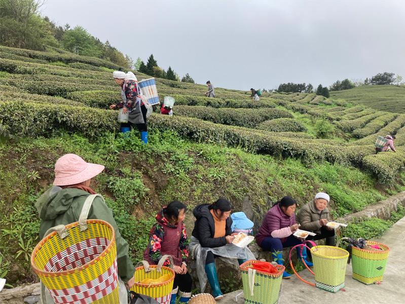 Hign Mountain Bi Luo Chun 2