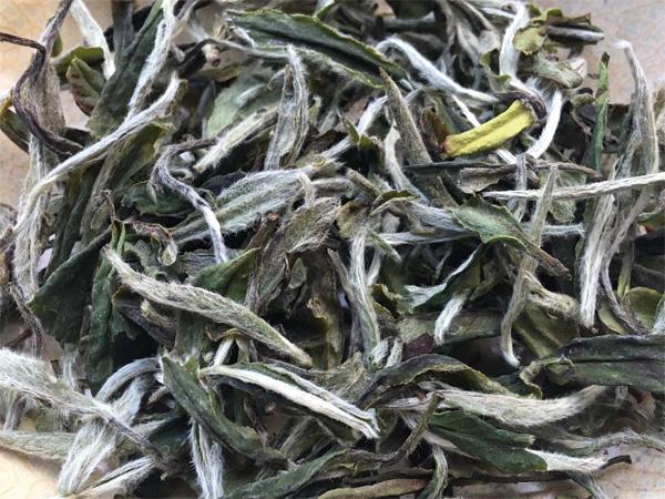 Fujian Bai Mu Dan