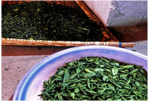The fried tea leaves of Liu An Gua Pian