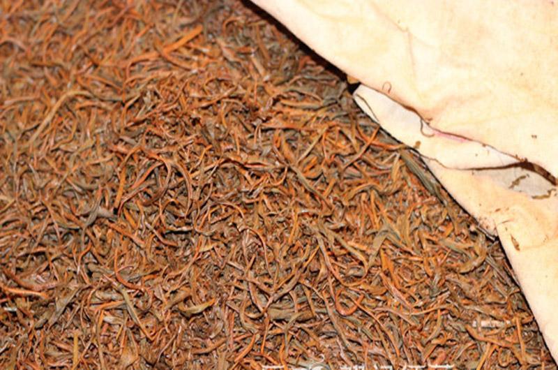 Old Tree Yunnan Black Tea 10