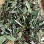 2018 crop of Gong Mei White Tea