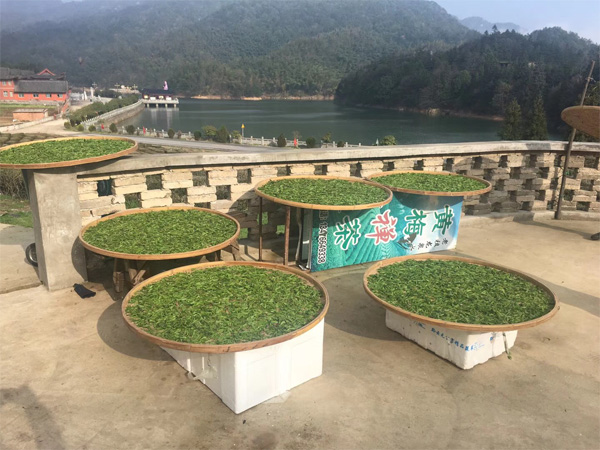 A Buddhist Temple in Chinese Hubei Province is producing tea