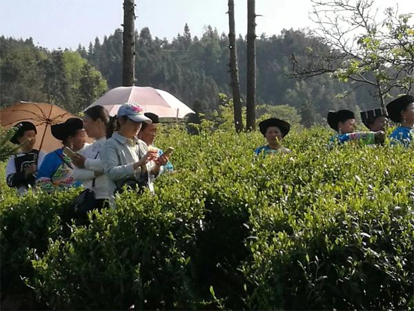 A Tea Festival of Miao Race in West Hunan