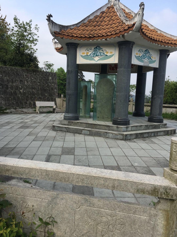 Gui Ding Yun Wu Green Tea