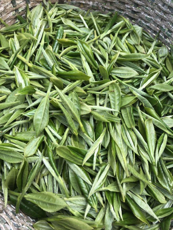 Hand Made Chinese Green Tea