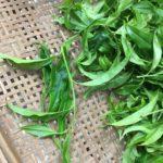Lao Cong Bamboo Leaf Phoenix Dan Cong