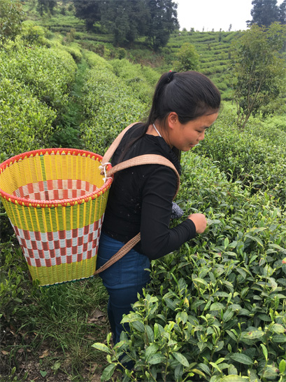 2018 Spring Tea Journey