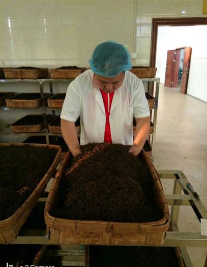 Fermentation of Yingde Black tea