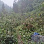 natural growing tea tree