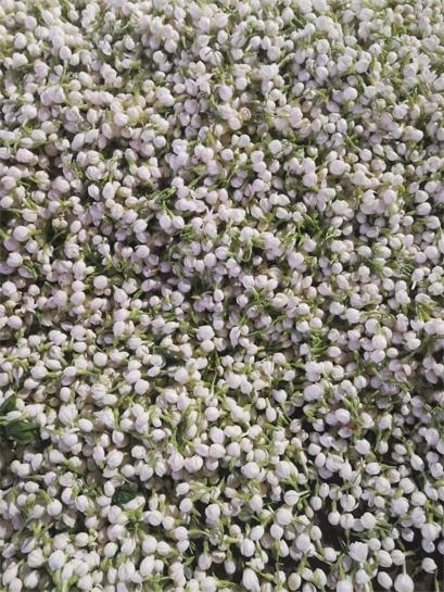 Jasmine Tea and jasmine flower