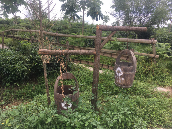 A Ceres Organic Tea Garden in West Hubei