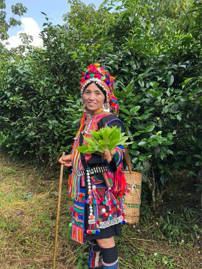 Harvest of Gu Hua Cha 3