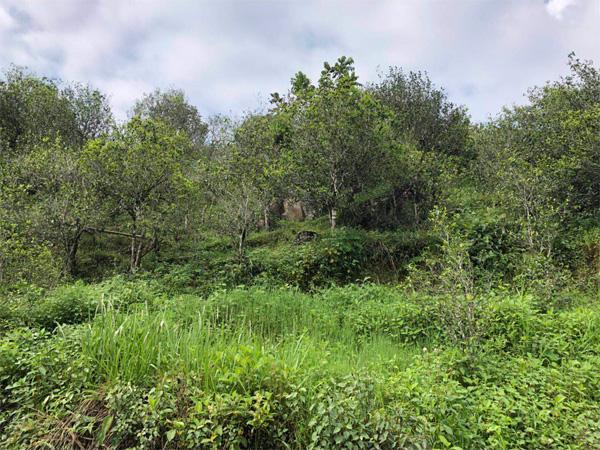 Xi Gui Tea Garden 2