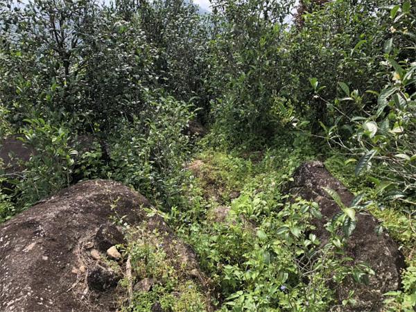 Xi Gui Tea Garden 3