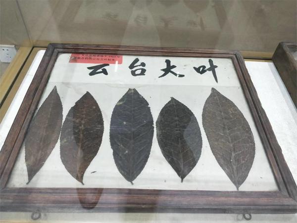 2017 Tian Jian Dark Tea 4