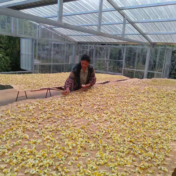 Tea Flower 5