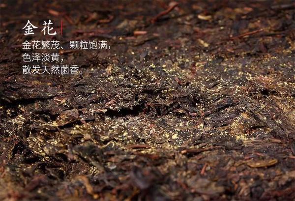 The Golden Flower of Fuzhuan Cha 1