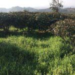 High Mountain Tea Garden 3