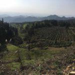 High Mountain Tea Garden 4