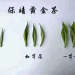 The plucking standard of chinese tea
