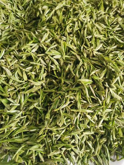 The fresh leaf material to process top grade Bai Mu Dan 1