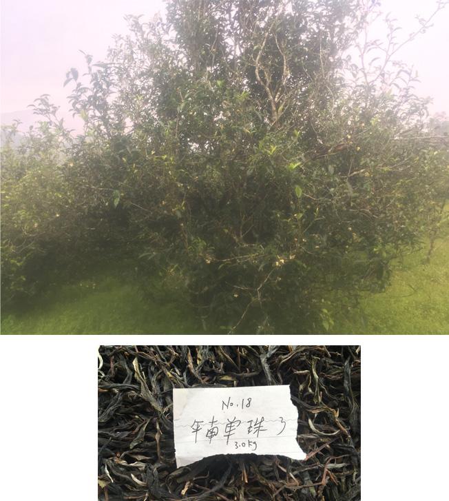Gu Shu Dan Zhu No.18