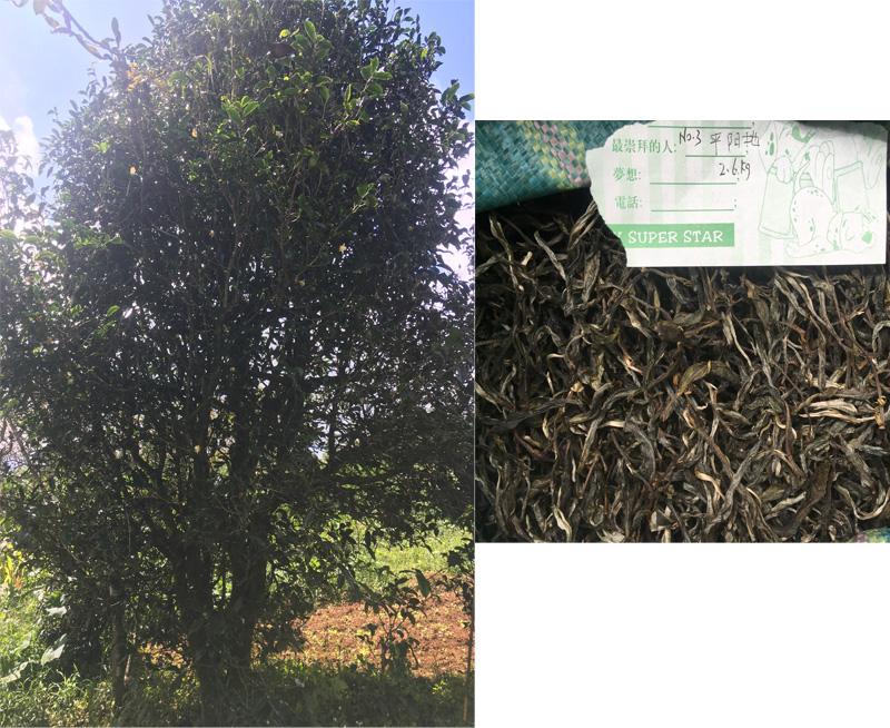 Gu Shu Dan Zhu No.3