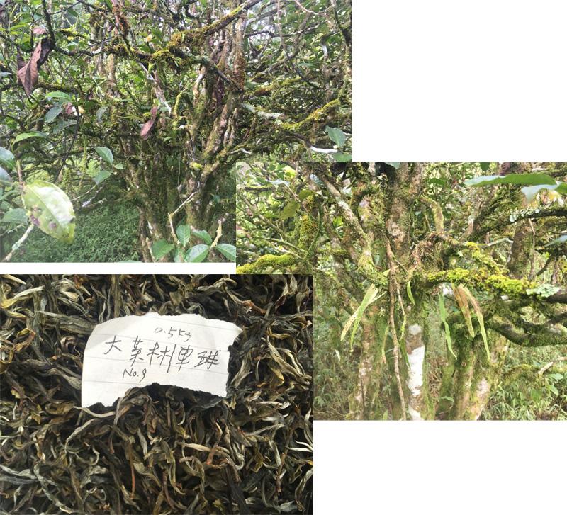 Gu Shu Dan Zhu No.9