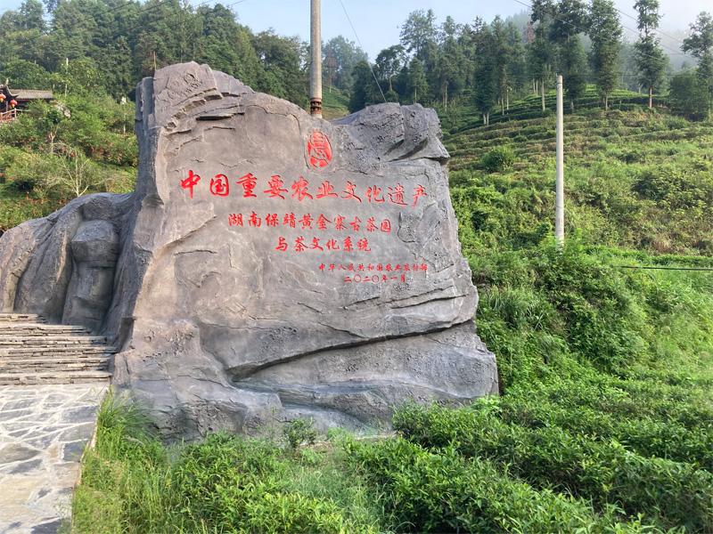 Bao Jing Huang Jin Cha 4
