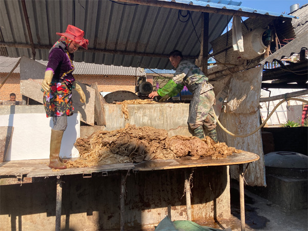 The manufacturing of traditional Thai Wrapping Paper 9