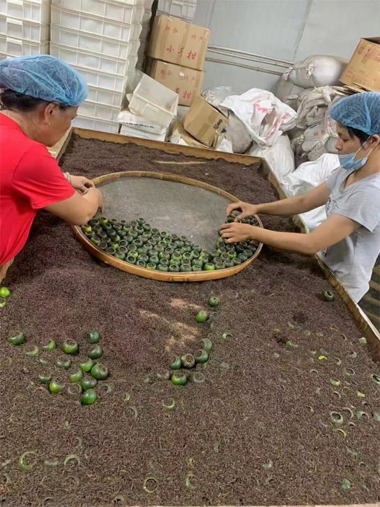The processing of Tangerine Pu-erh in Xinhui 6