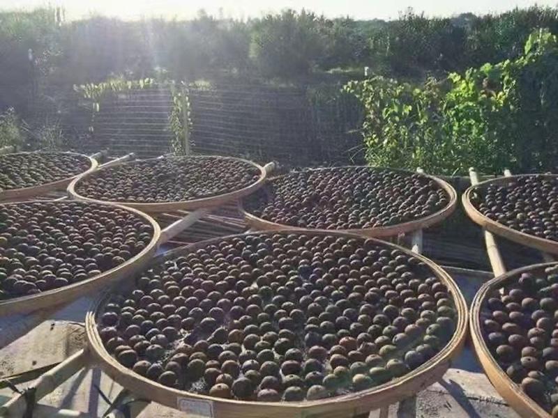 The processing of Tangerine Pu-erh in Xinhui 8